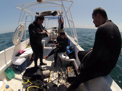 Estudio de Pepinos de mar