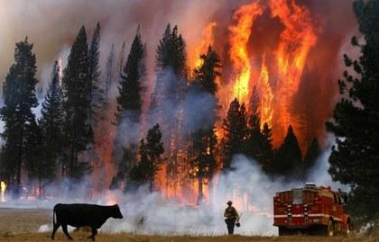 Economía Sustentabl::california.jpg