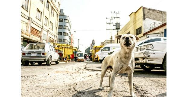 En la calle. Foto: Mario Olarte