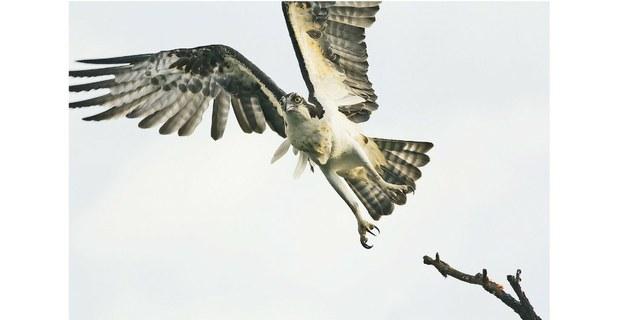 Aves de Xochimilco. Foto: Tamara Blázquez Haik